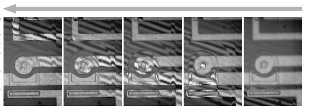 Процесс получения интерферометрического изображения Leica DCM8