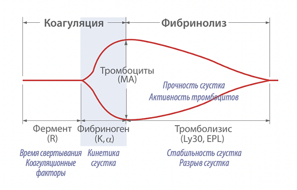 Схема тромбоэластограммы